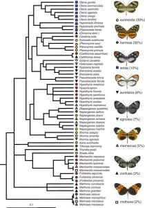 A community phylogeny of 58 species of ithomiine butterfly found in the Anagu region of Napo, Ecuador